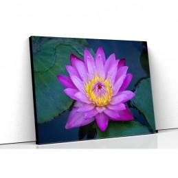 Tablou canvas lotus mov