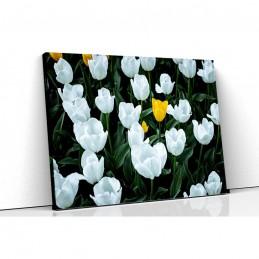 Tablou canvas lalele albe
